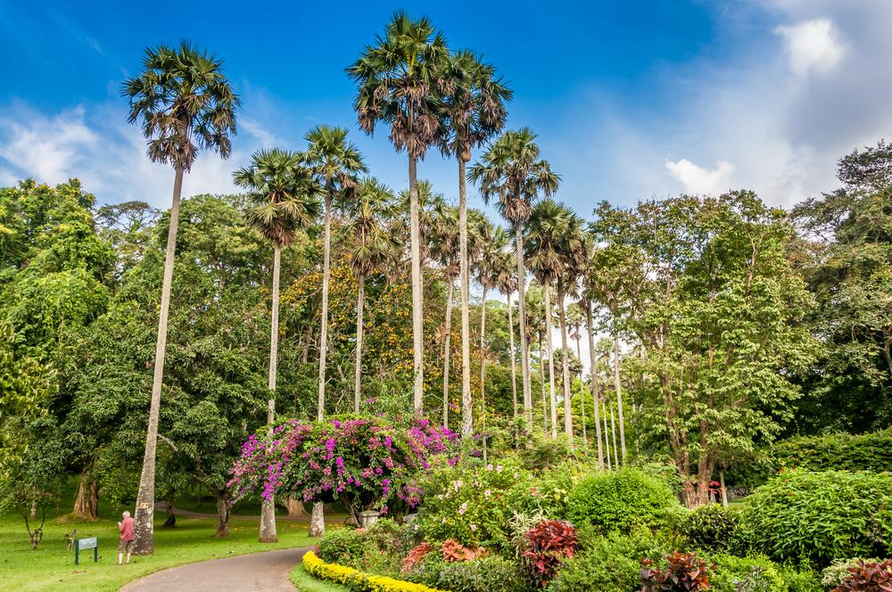 shutterstock 166963703 - II Международный Форум«Современная традиционная народная медицина и духовные практики»  на Шри - Ланке