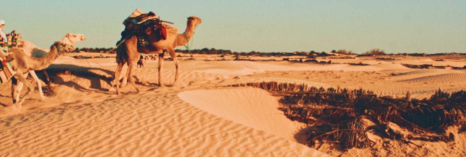Тунис. Старт продаж зимнего сезона 2020