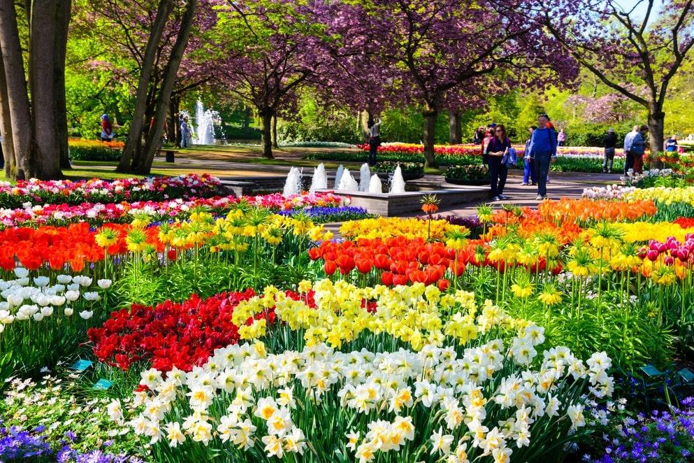 Романтика в цветах