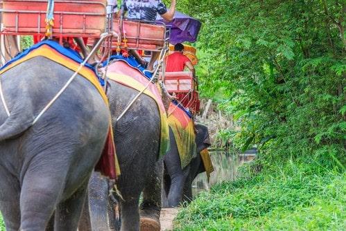 Слоны на сафари